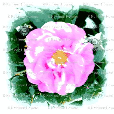 wild_rose_boost_011-ch