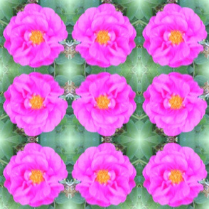 wild_rose_mat_011-ed