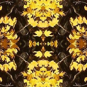 Browns and golds of autumn