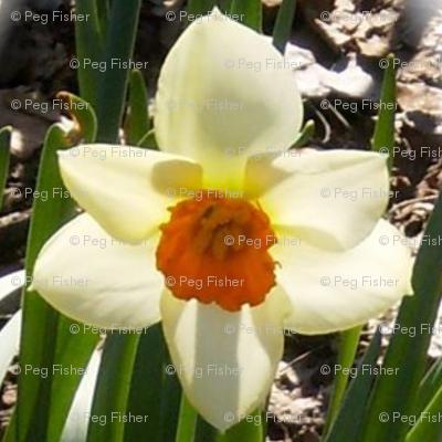 Spring up!