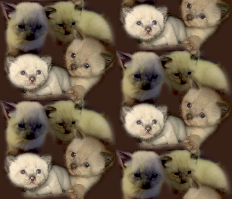 Fuzzy Kittens on Brown fabric by dawnams on Spoonflower - custom fabric