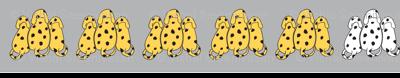 Yellow & white dalmatians
