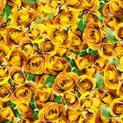 Rrabundant_roses_-_yellow_11-10-13_shop_thumb