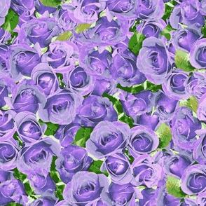 Abundant Roses - Blue Moon