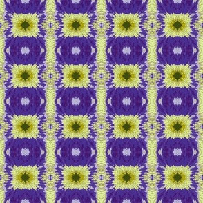 cross_crop_Siberian_Iris_6_11_07_004-ch-ch-ch-ch-ch-ed-ch