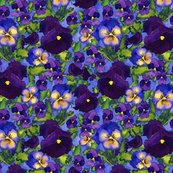 Rr04_pansies_flat_2__shop_thumb