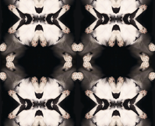 Rcatscanflower_thumb