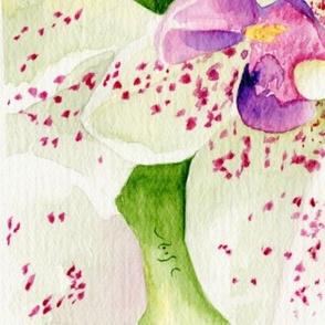 Fuschia Orchids