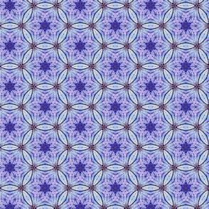 Blue flower stars