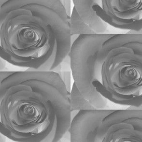 rose photo negative
