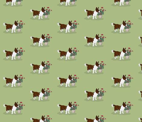 Brindle Cardigan Welsh Corgi fabric by hauteideas on Spoonflower - custom fabric