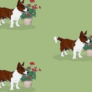 Brindle Cardigan Welsh Corgi