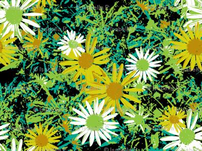 Wild Daisy - Botanical Colours