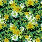 Rrwild_daisy_in_botanicals_pallet_shop_thumb
