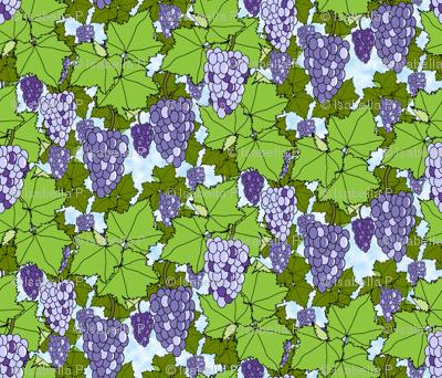 Fresh Purple Grapes - Day