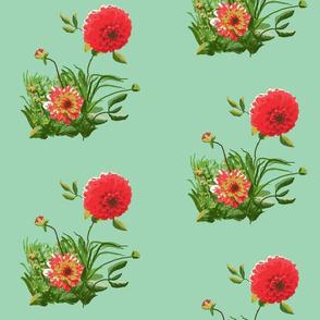 dahlia_A_edit_1b_Picnik_collage-ch
