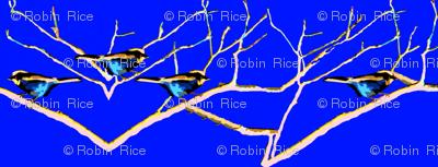 Blue Birds in Colrain