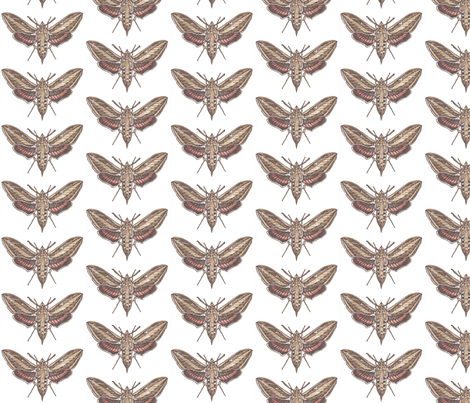 White-Lined Sphinx Moth fabric by holiday on Spoonflower - custom fabric