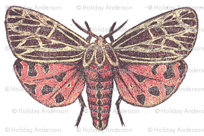Small Tiger Moth
