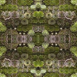 succulent kalidescope