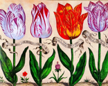 Rbotanical-livres-de-fleurs-1620-18_thumb