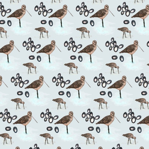birds_and_barnacles_grey