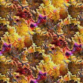 Autumn Coleus