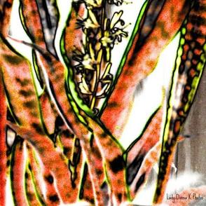 Blooming Sansaveria