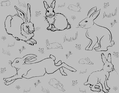 Year of the Silver Rabbit