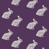 Purple Rabbit