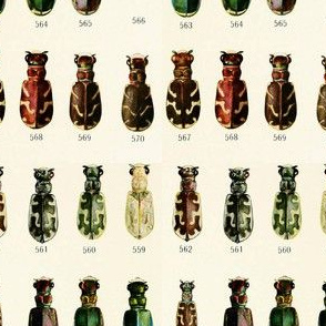 Colors of beetles