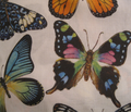 Rrrrrbutterfly_collage_for_fabric_comment_95150_thumb