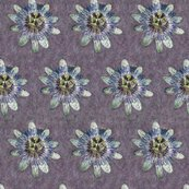 Rpassiflora_shop_thumb