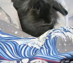 Rrrrrrmoon-rabbit-re_comment_47770_thumb