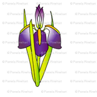 pattern_-_iris