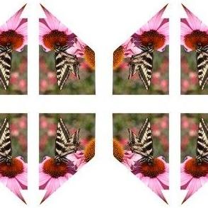 Nevada Butterfly