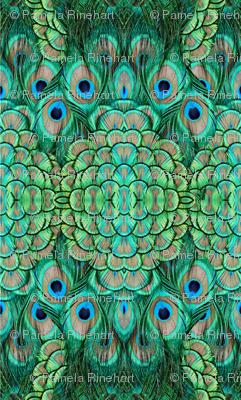 ©2011 peacock-4