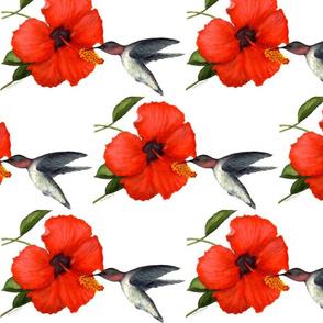 watercolor_hibiscus_and_hummingbird