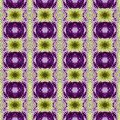 Rrcross_crop_siberian_iris_6_11_07_004_ed_shop_thumb