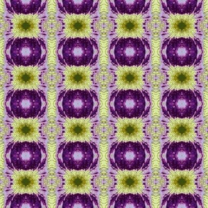 _Siberian_Iris_Abstract 6_11_07_004-ch-ch-ch-ch-ch-ed-ch-ch-ch-ch-ch