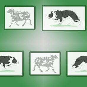 Border Collies herding portrait - green