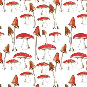 champignons_mignons