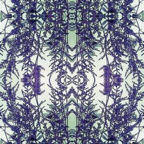 Lavender_Fern