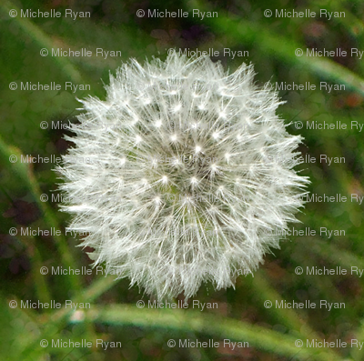 Mini Dandelion