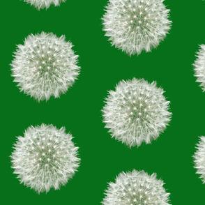 Green Dandelion