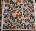 Rrsm_butterflies_on_grey_copy_comment_95140_thumb