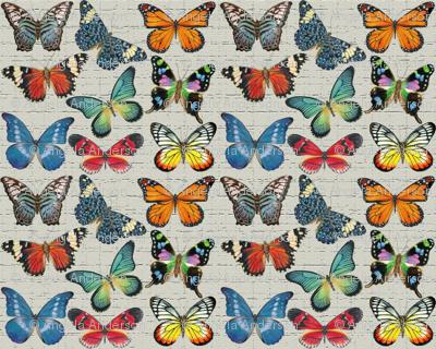 Sm Butterflies on Grey