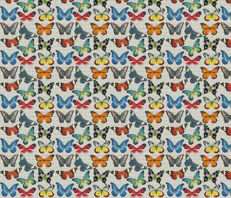 Rrsm_butterflies_on_grey_copy_shop_preview