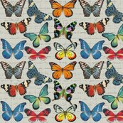 Rrsm_butterflies_on_grey_copy_shop_thumb