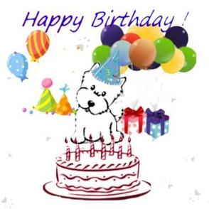 Westie Birthday